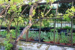 Le jardin nourricier